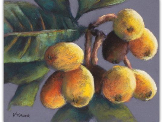 Bermudian artwork pastel painting of loquats by artist Vanessa Turner